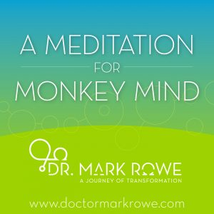 Meditation for Monkey Life
